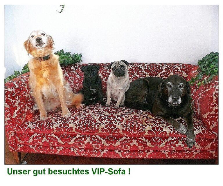146 vip sofa